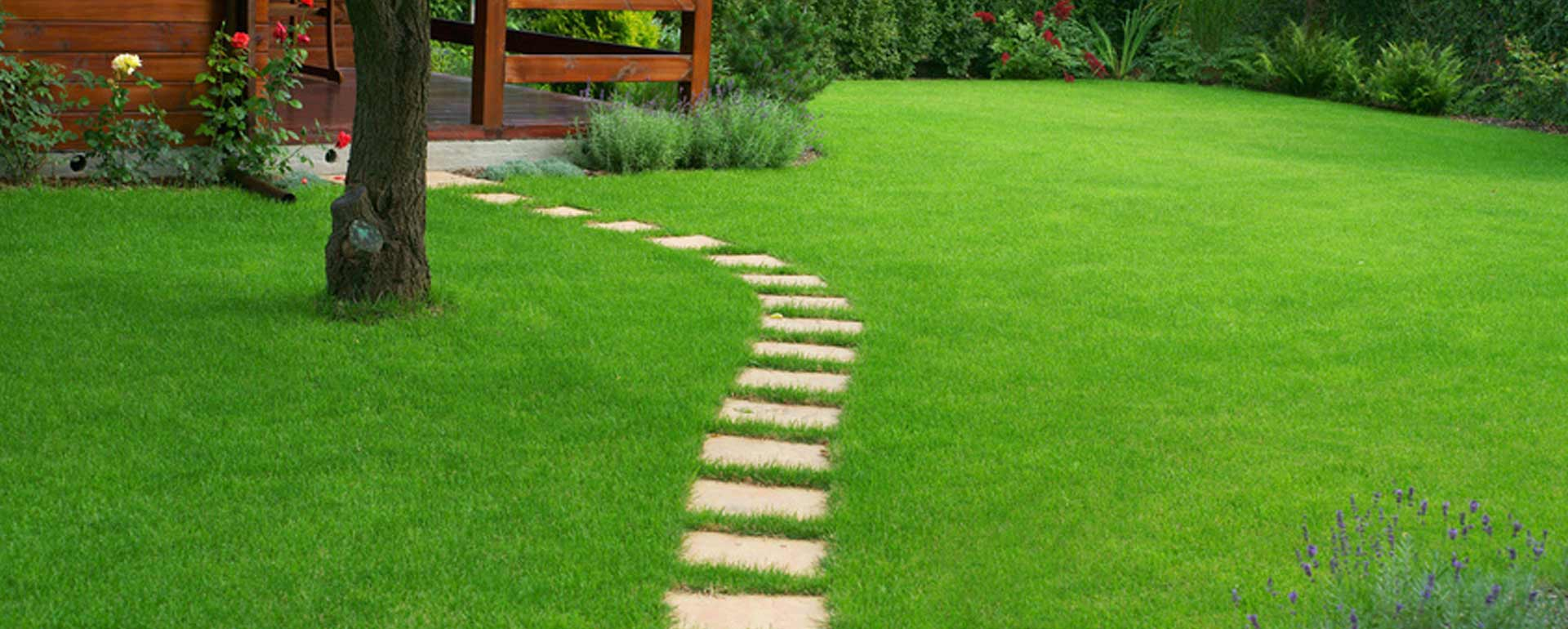 Beautiful Green Lawn from Lubbock Turf Co.